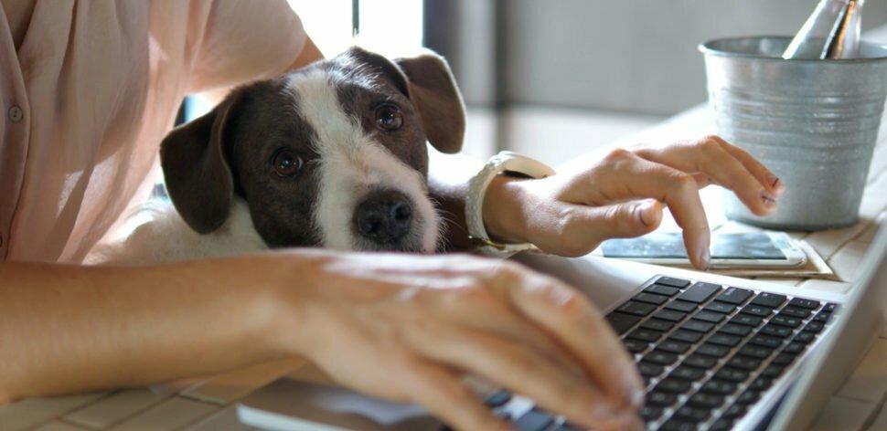 Pet Shop on-line: confira nossa avaliação